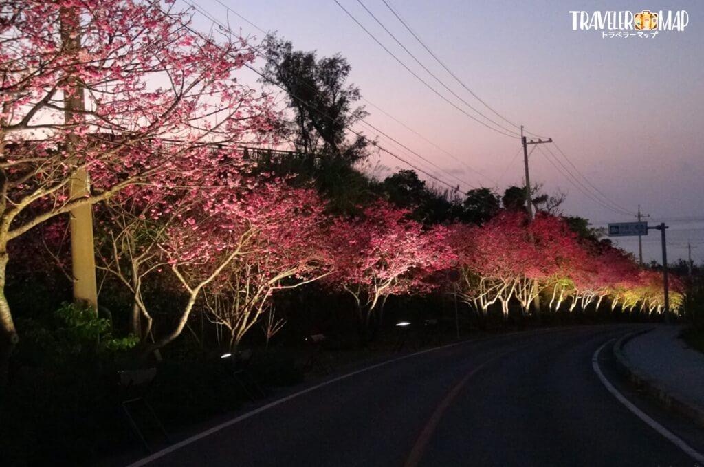 今帰仁グスク無料区域の夜桜