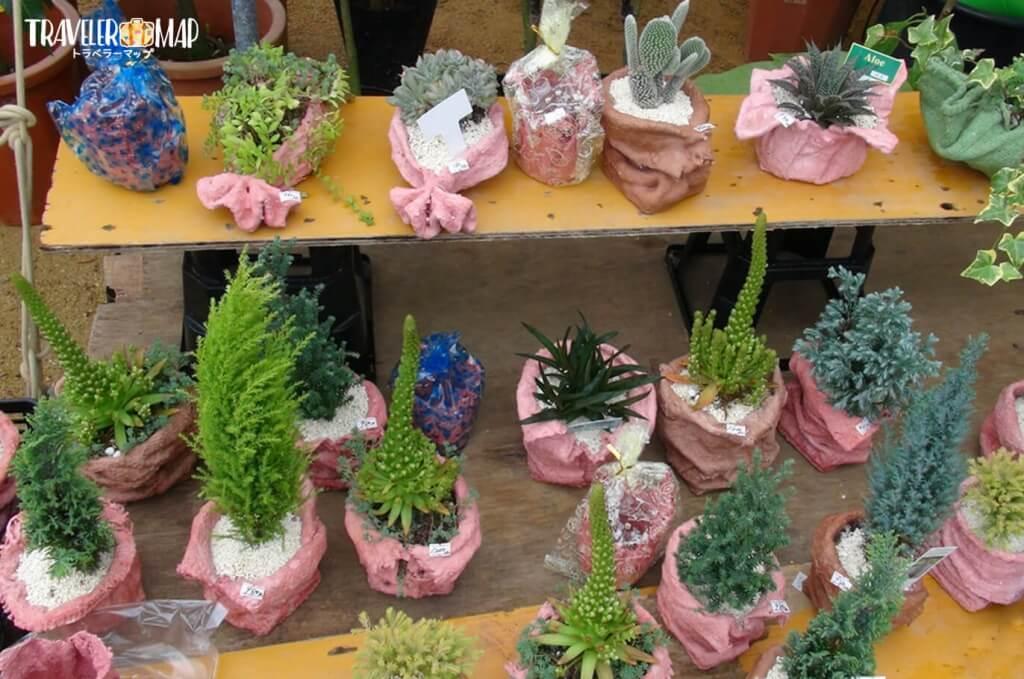 産業祭りで販売されている植物