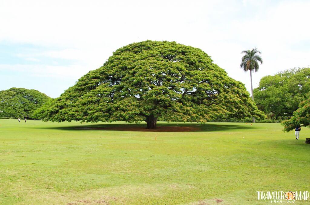 モアナルア・ガーデン(この木なんの木)