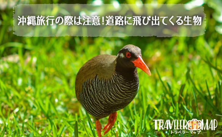 沖縄旅行の際は注意!道路に飛び出てくる生物