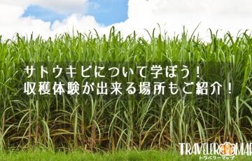 サトウキビについて学ぼう!収穫体験が出来る場所もご紹介!