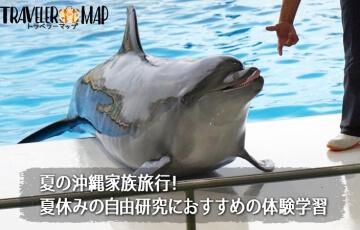 イルカと触れ合い