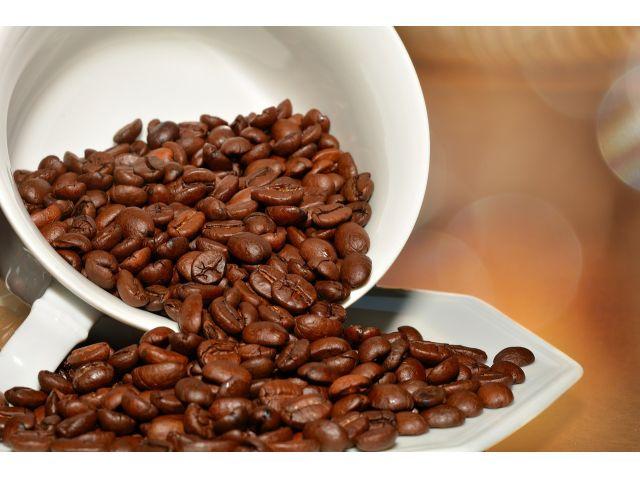 沖縄コーヒー体験農園