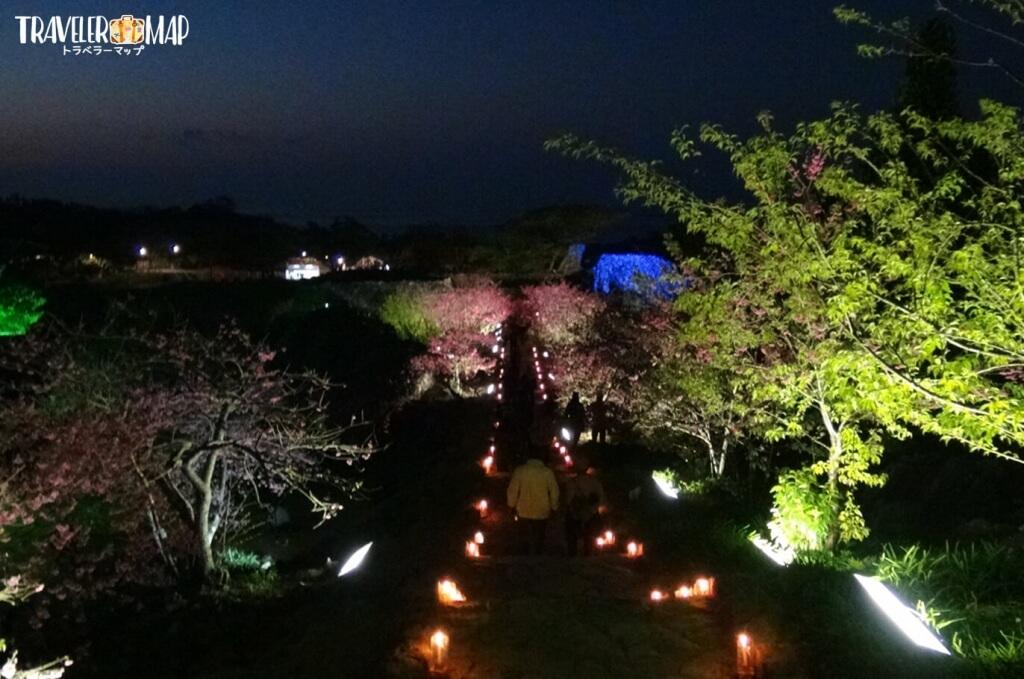 今帰仁グスク夜桜