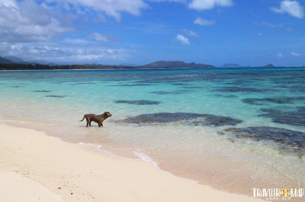 犬とビーチ