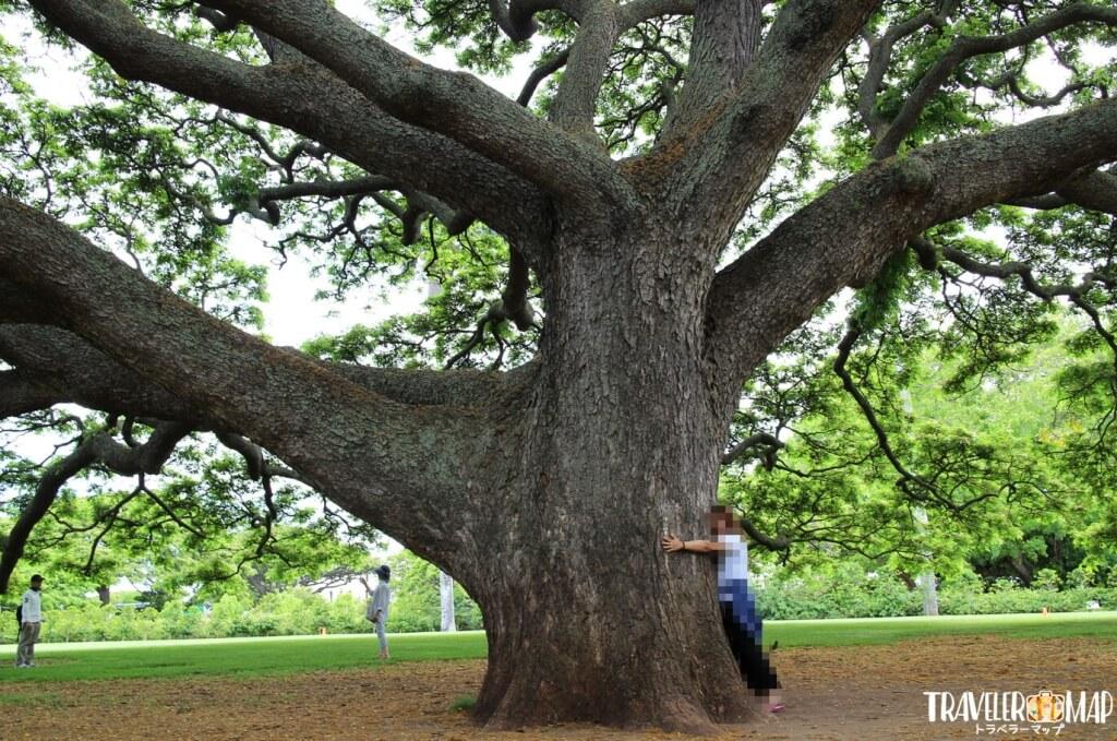 木を人の手で覆う
