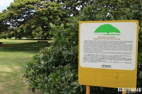 日立のCMの木の説明
