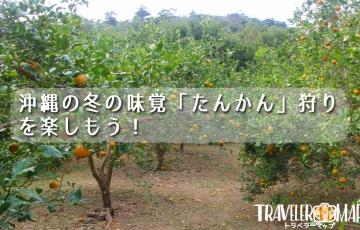 沖縄の冬の味覚「たんかん」狩りをして楽しもう!