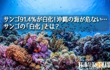 サンゴが白化