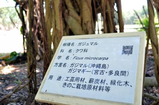 造林樹種展示園・学習東屋