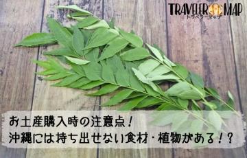 沖縄県から持ち出せない検疫で引っかかる植物